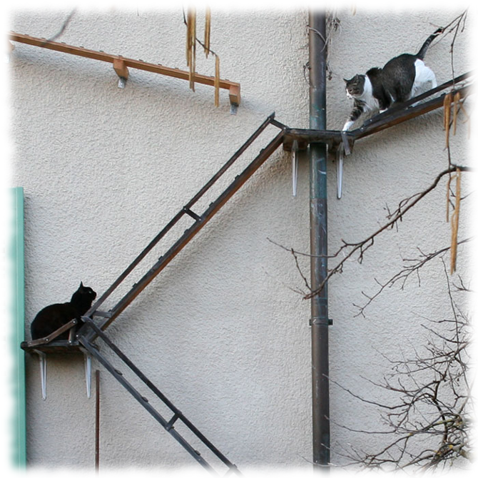 Ladder safety in gutter cleaning
